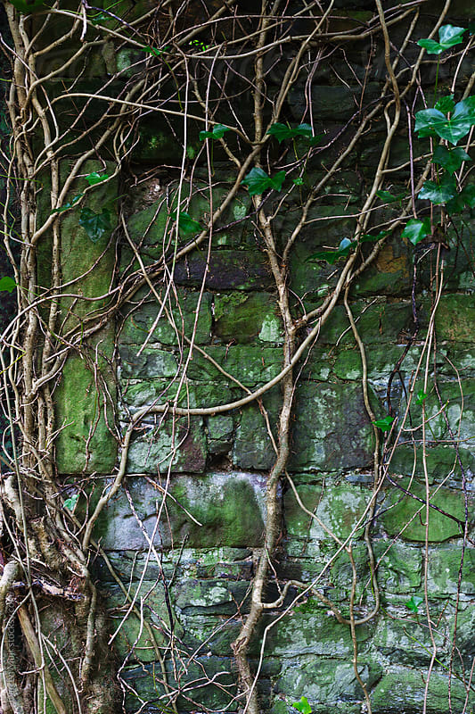 Nature reclaims.  by Darren Muir for Stocksy United