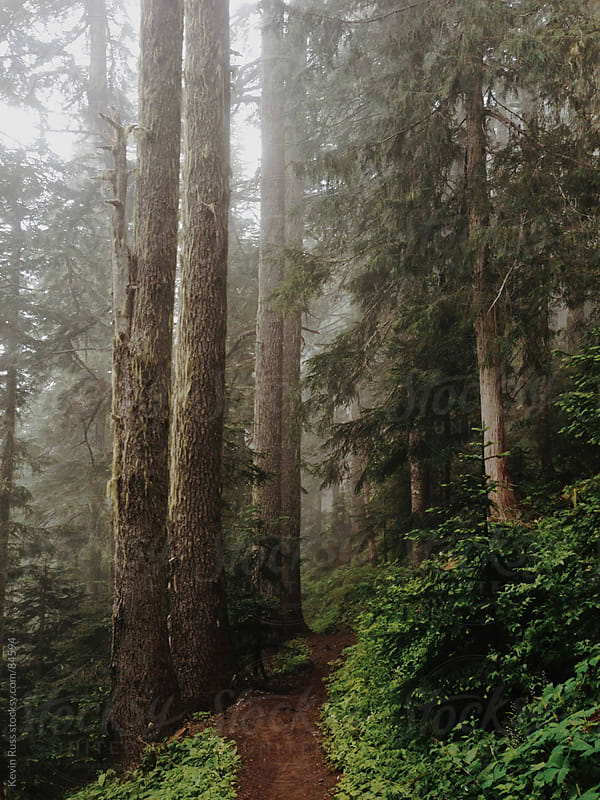 Foggy Hiking Trail by Kevin Russ for Stocksy United