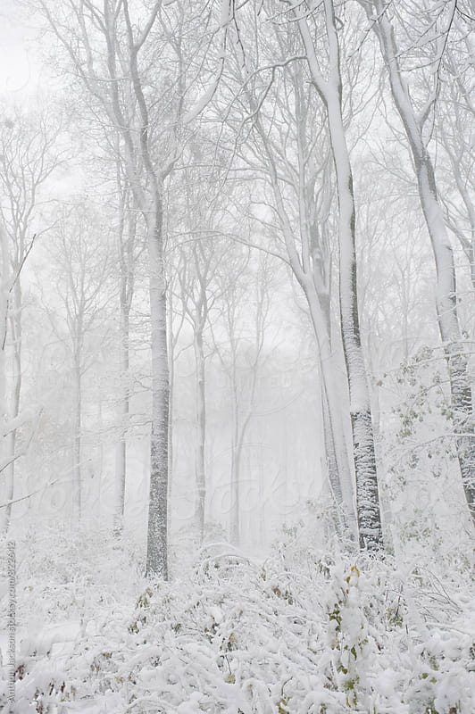Falling Snow by Anthon Jackson for Stocksy United