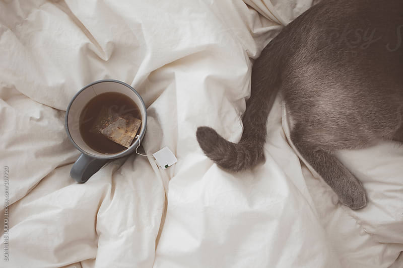 Closeup of cup of tea and cat sleeping on the bed.  by BONNINSTUDIO for Stocksy United
