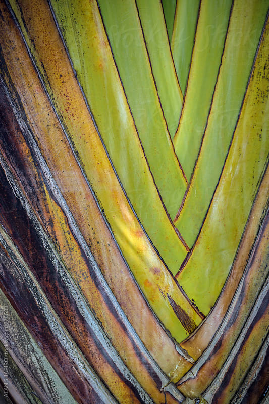 palm fronds by alan shapiro for Stocksy United