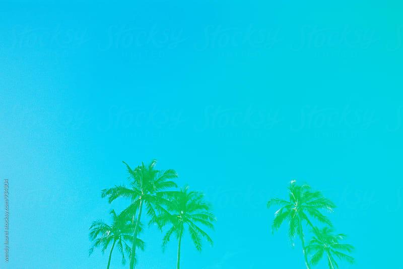 aqua palm trees by wendy laurel for Stocksy United