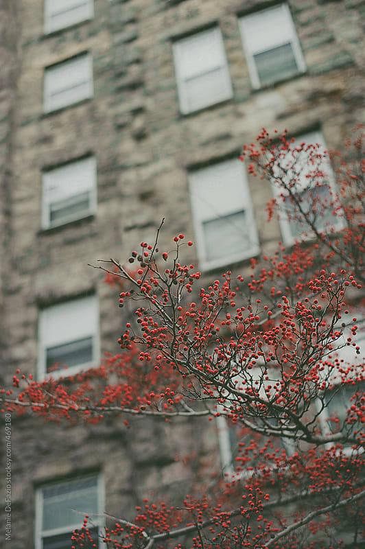 Green hawthorn tree by Melanie DeFazio for Stocksy United