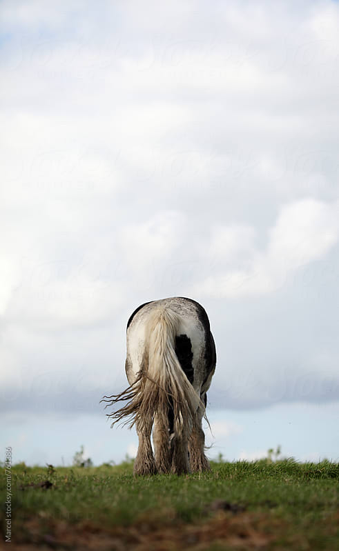 grazing mustang horse seen from behind by Marcel for Stocksy United