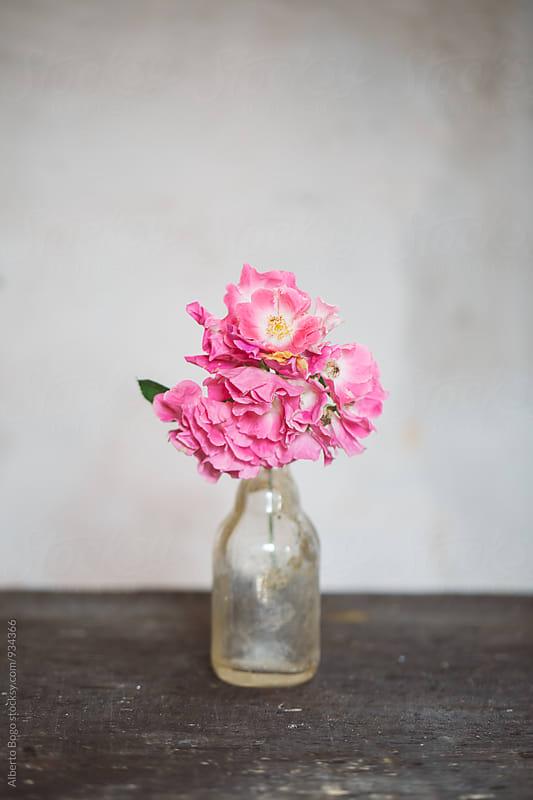 Pink flowers in glass vase by Alberto Bogo for Stocksy United