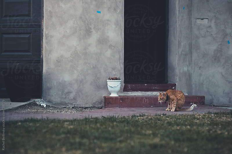 Crouching orange tabby cat profile against old stucco house by Rachel Bellinsky for Stocksy United