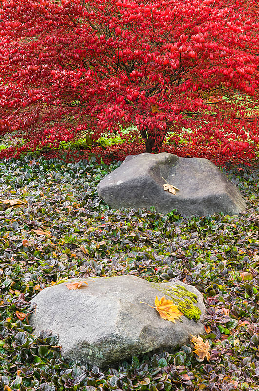 Autumn color a Japanese garden by Mark Windom for Stocksy United