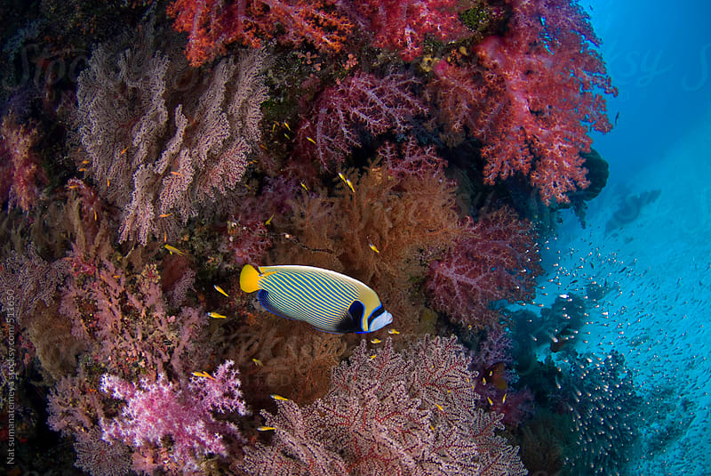 Colourful reef by Nat sumanatemeya for Stocksy United