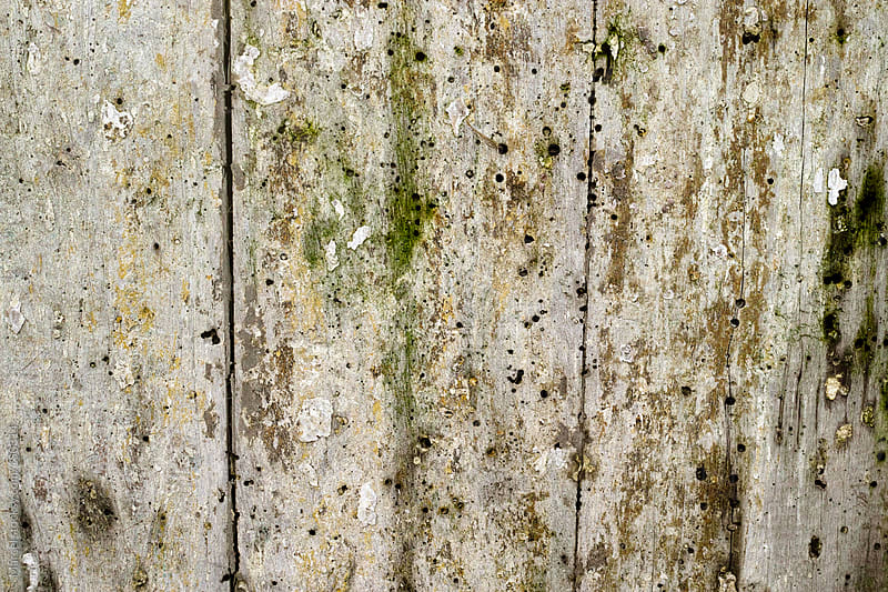 Old wood background by Marcel for Stocksy United