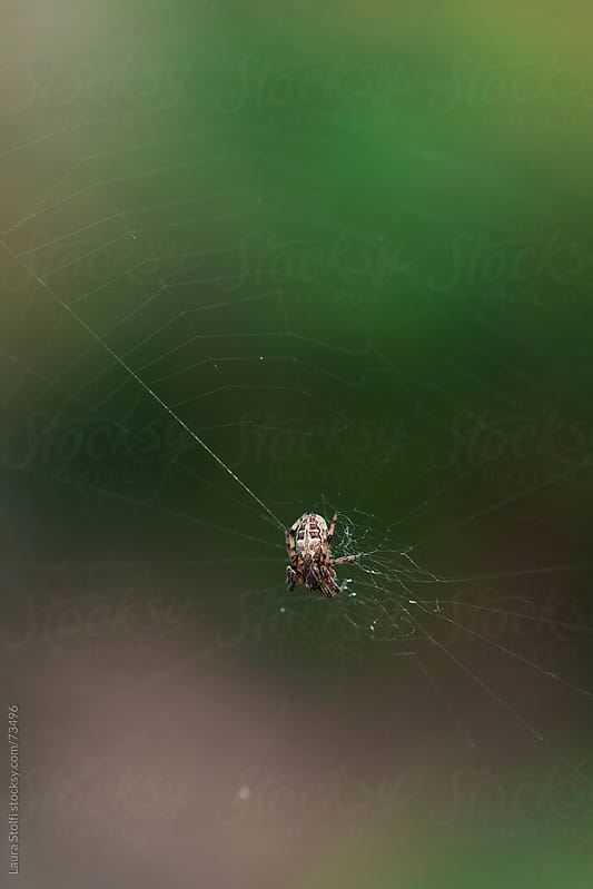 Spider on its web  by Laura Stolfi for Stocksy United