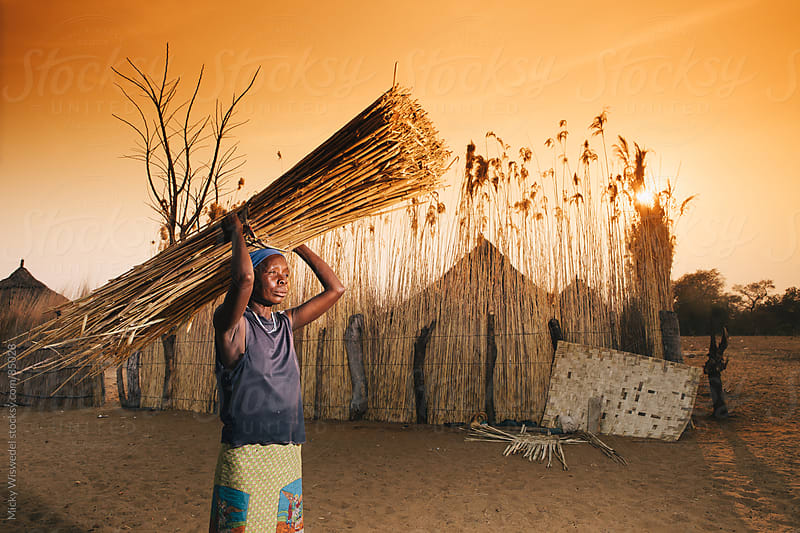 African Hambukushu woman carrying reeds for thatching in front of her village by Micky Wiswedel for Stocksy United