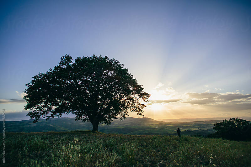 Tree in a field with a man by michela ravasio for Stocksy United