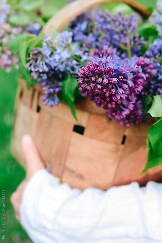 Woman holding lilac by Pixel Stories for Stocksy United