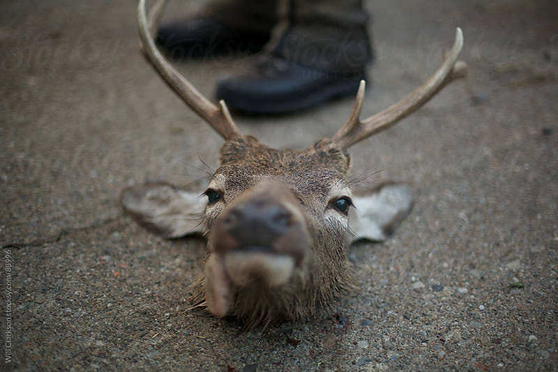 A stag's head sits on the ground by Will Clarkson for Stocksy United