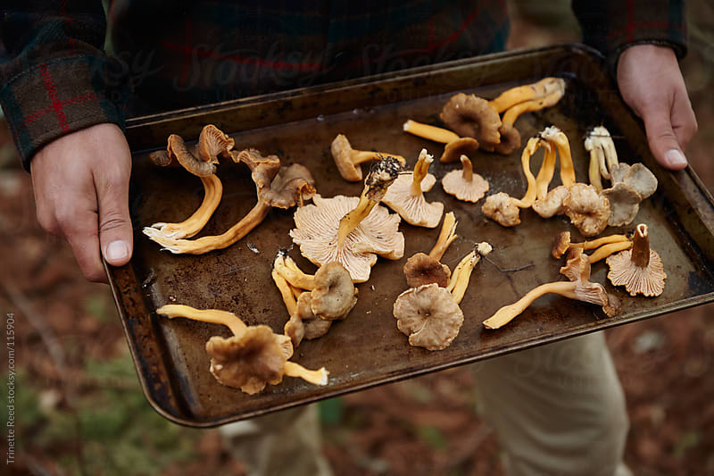 Man holding tray of fresh foraged mushrooms in forest by Trinette Reed for Stocksy United