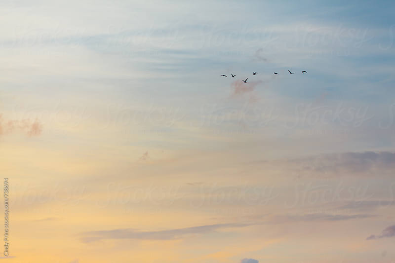 A flock of birds flying in the sky at sunset by Cindy Prins for Stocksy United