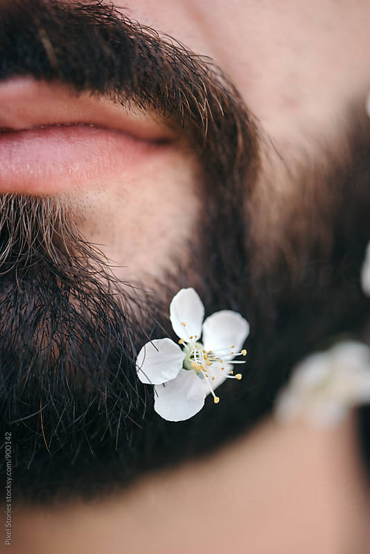 Close-up of Spring blossom on beard by Pixel Stories for Stocksy United