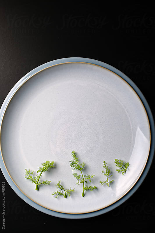 Fennel fronds on a plate. by Darren Muir for Stocksy United