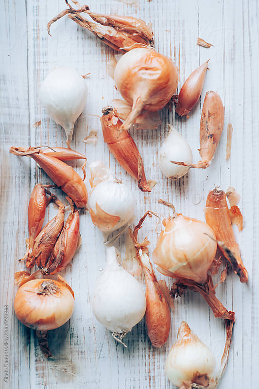 Onions  by Giada Canu for Stocksy United