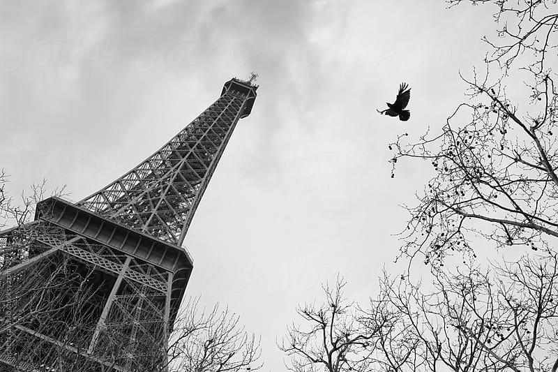 Eiffel Tower  by michela ravasio for Stocksy United