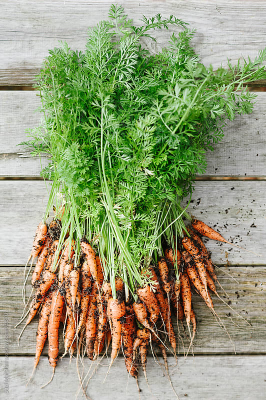 Freshly picked carrots on a wooden table by Suzi Marshall for Stocksy United
