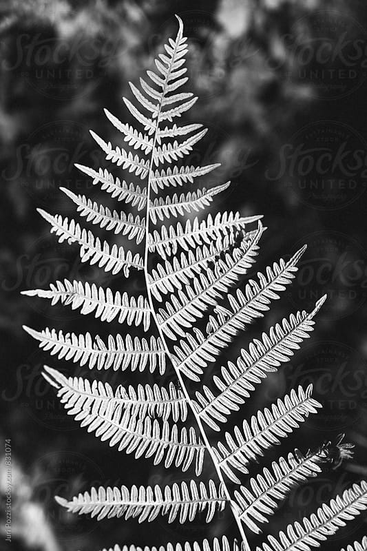 detail of a fern in black and white by Juri Pozzi for Stocksy United