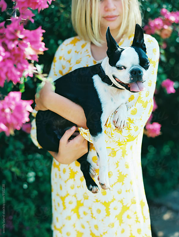 boston terrier held by blonde girl with yellow dress by wendy laurel for Stocksy United