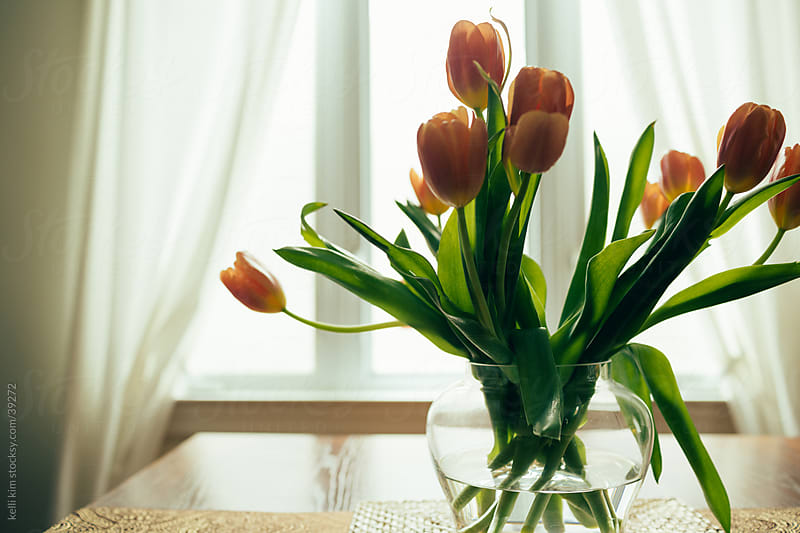 Bouquet of orange tulips, backlit by window by kelli kim for Stocksy United