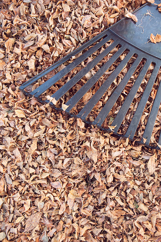 Autumn: Rake and Leaf Pile by Sean Locke for Stocksy United
