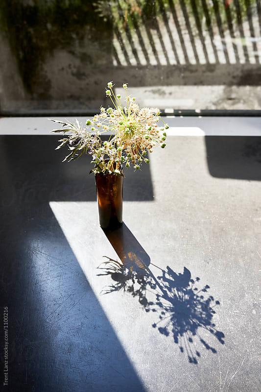 Tiny plant in small vase on table in sunlight by Trent Lanz for Stocksy United
