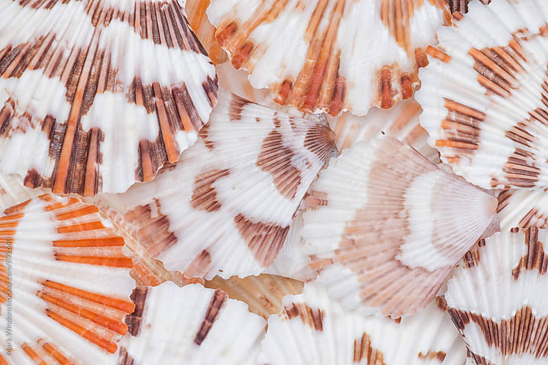 Scallop seashell collection, closeup by Mark Windom for Stocksy United