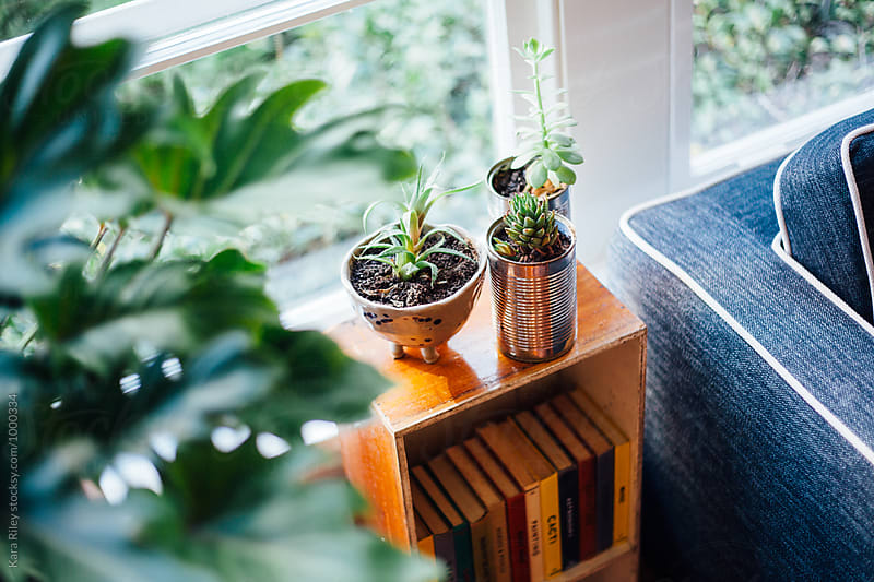Succulents on Bookshelf by Kara Riley for Stocksy United