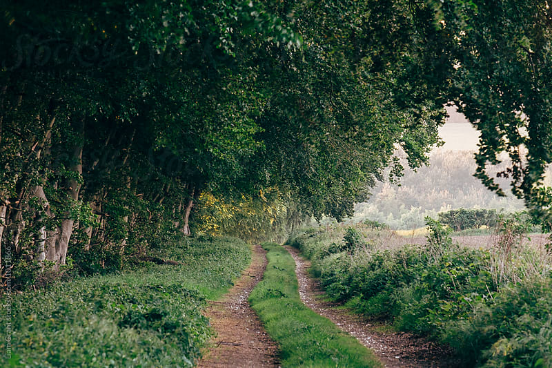 Wind blowing woodland beside a farm track. Norfolk, UK. by Liam Grant for Stocksy United