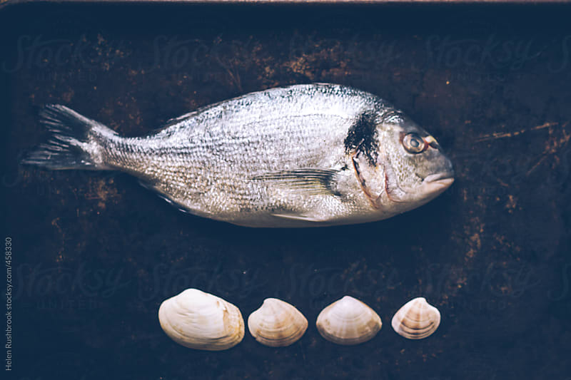 Sea Bream and clams by Helen Rushbrook for Stocksy United