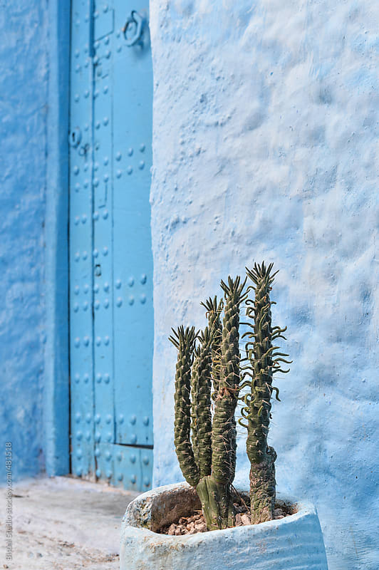 Blue facade with cactus, Chefchaouen by Bisual Studio for Stocksy United