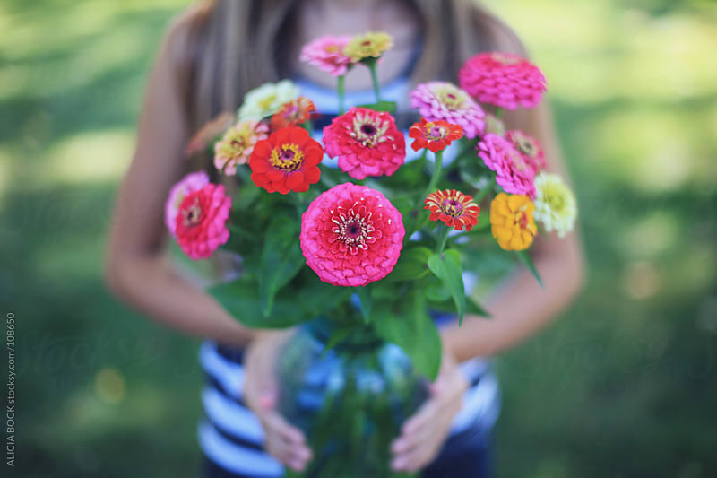 Zinnia flowers from the garden.  by ALICIA BOCK for Stocksy United