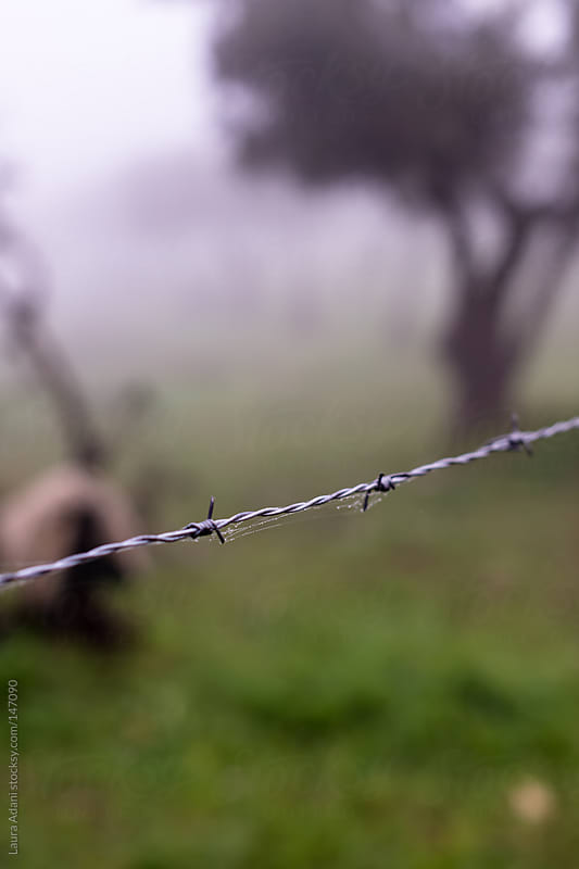 barbed wire which surrounds a olive grove  by Laura Adani for Stocksy United