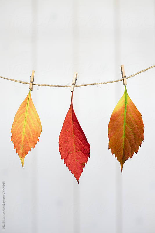 Colorful autumn leaves hung on drying line by Pixel Stories for Stocksy United