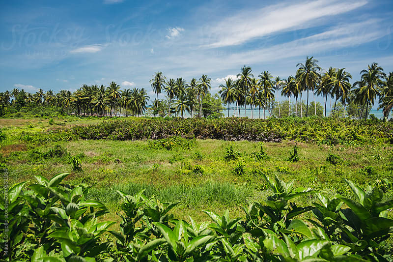 Landscape in Thailand by Mauro Grigollo for Stocksy United