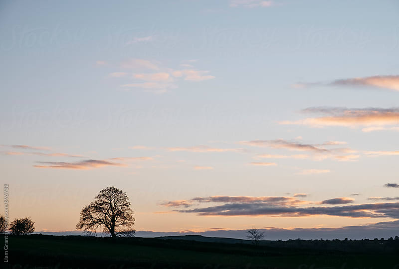 Tree on a hilltop above Matlock silhouetted at twilight. Derbyshire, UK. by Liam Grant for Stocksy United