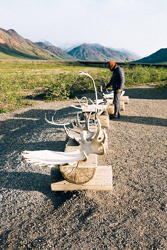 A Young Man Looks At Moose And Caribou Antlers On Display In Denali National Park by Luke Mattson for Stocksy United