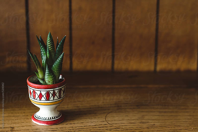 A tiny succulent in an egg cup on an oak dresser. by Helen Rushbrook for Stocksy United