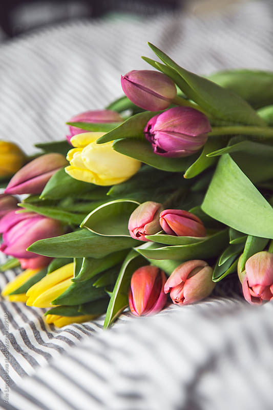 Colorful Bouquet of Tulips  by Alie Lengyelova for Stocksy United