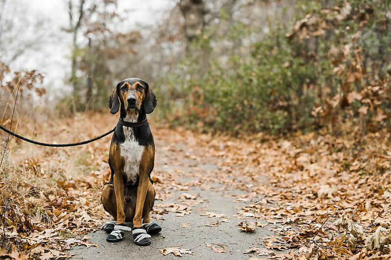 Well behaved dog sitting in park by Isaiah & Taylor Photography for Stocksy United
