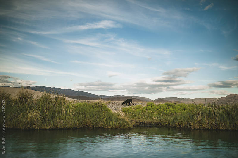 A dog on the shore of hot springs against a cloudy blue sky by Rachel Bellinsky for Stocksy United