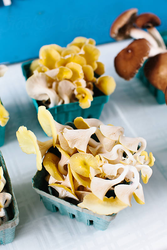 fresh mushrooms at the greenmarket by Christine Han for Stocksy United