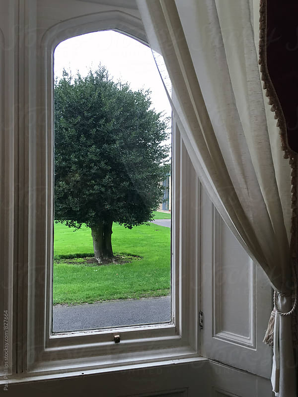View from an old window towards small tree in garden. by Paul Phillips for Stocksy United