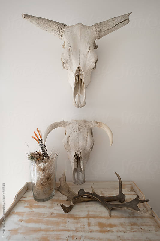 Styled lounge room with skull hung on wall by Rowena Naylor for Stocksy United