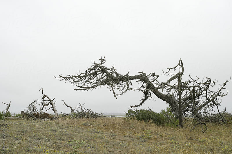 dead tree on the coast of Bretagne by Marcel for Stocksy United