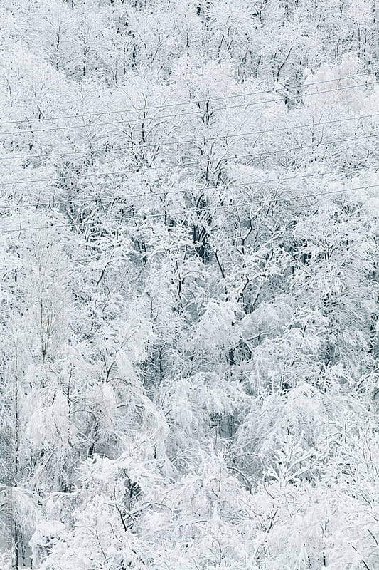 Trees Covered With Snow During Winter by Borislav Zhuykov for Stocksy United